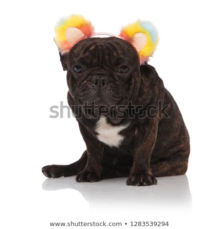 cute french bulldog wearing colored bear ears headband sitting Stock photo © feedough