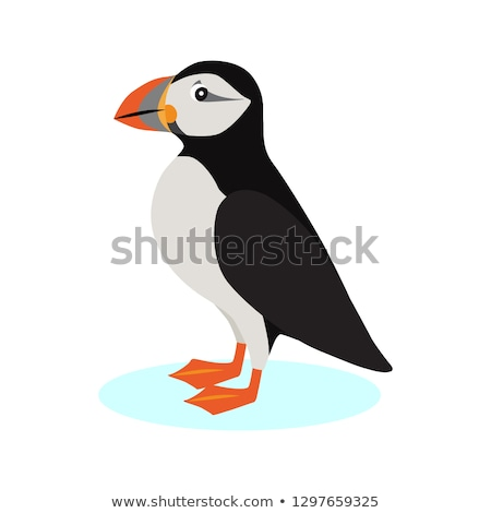 Atlantic puffin icon, polar bird with colorful beak isolated on white background, species of seabird Stock photo © MarySan