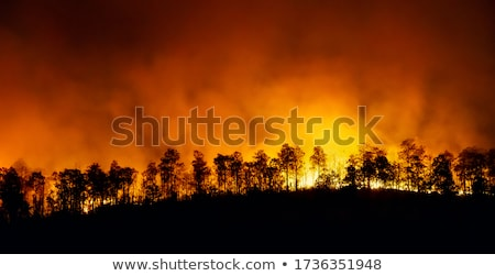 Wildfire lasu scena noc ilustracja drzewo Zdjęcia stock © colematt