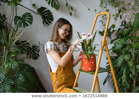 Nő kertész dolgozik virágok üvegház fotó Stock fotó © deandrobot
