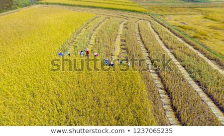 Stockfoto: Trekker · rijstveld · natuur · achtergrond · industrie