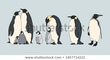 Emperor penguin animal cartoon isolated with baby Stock photo © cienpies