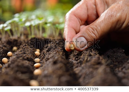 Hand Pflanzung Samen Boden Stock foto © AndreyPopov
