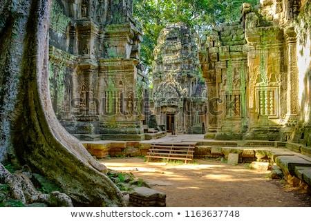 древних руин дерево корней храма Ангкор Сток-фото © dmitry_rukhlenko