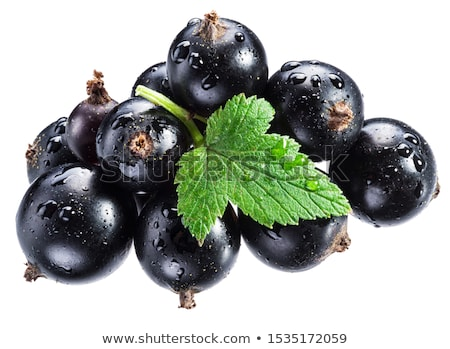 Fresh blackcurrant Stock photo © Dionisvera