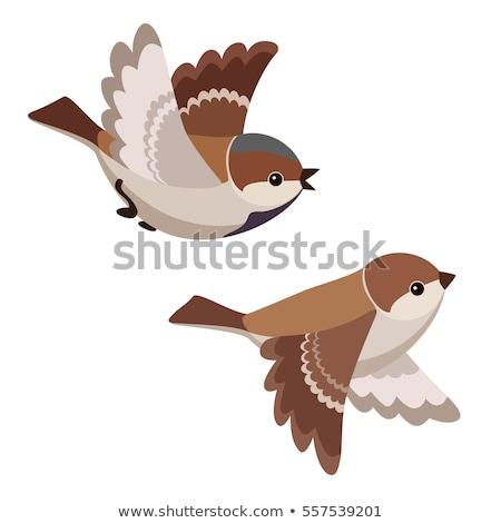 Cute vogel vliegen creatieve ontwerp kunst Stockfoto © indiwarm