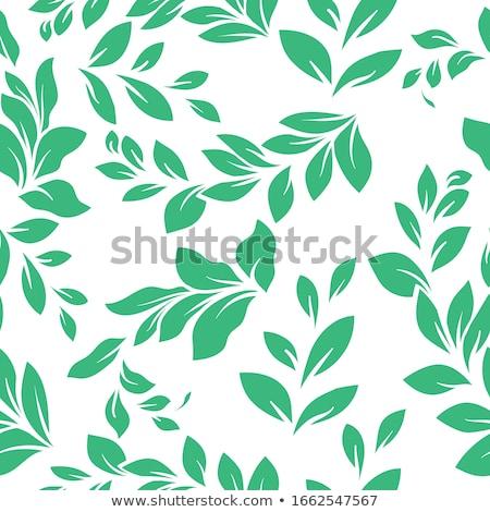 yaprak · canlı · yeşil · bitki · Hawaii - stok fotoğraf © pixelsnap