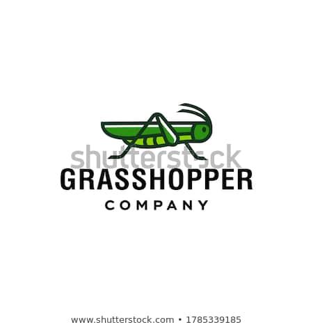 グラスホッパー ブレード 草 葉 緑 ストックフォト © smithore