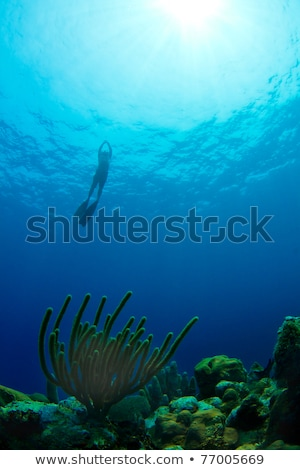 Freediving from a tropical reef in Honduras Stock photo © MojoJojoFoto