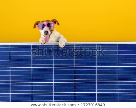 Funny Solar Panel Stock photo © pcanzo