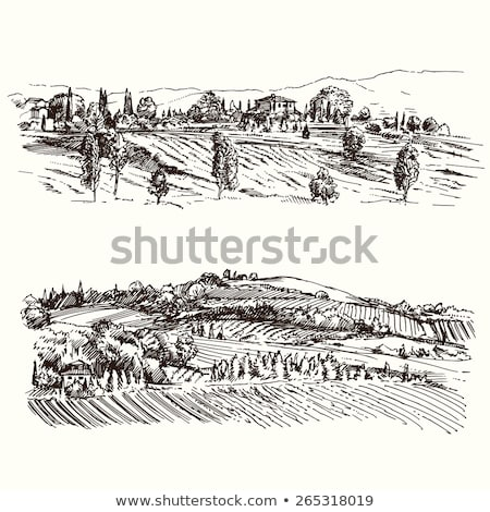hills and vineyards at sunrise in italy stock photo © rglinsky77