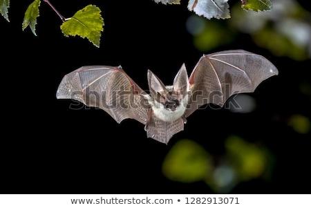 Bat nacht donkere volle maan vliegen rond Stockfoto © lordalea