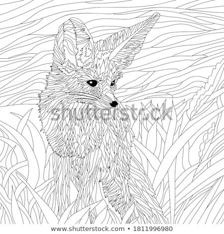 Róka rajz illusztrált szöveg textúra természet Stock fotó © mikemcd