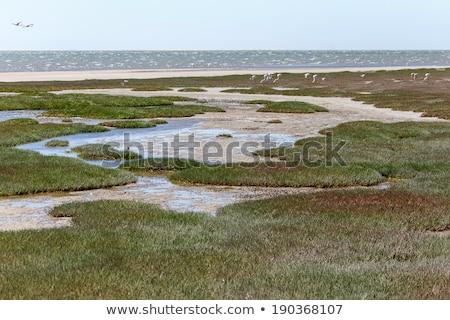 bitki · örtüsü · korumalı · Namibya · Afrika · çim · taze - stok fotoğraf © imagex