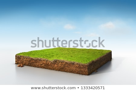 inside fresh green grass stock photo © anterovium