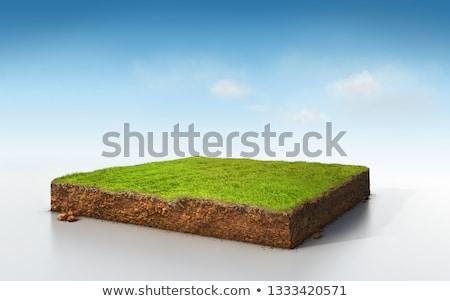 Dentro frescos hierba verde luz rocío Foto stock © Anterovium
