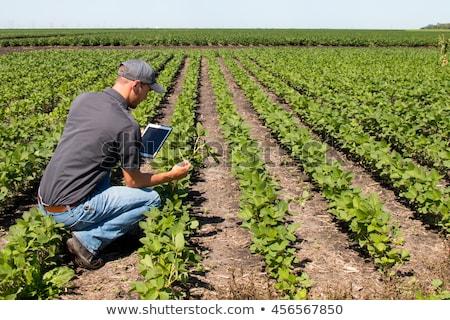 agronomist with tablet computer in corn field stock photo © stevanovicigor