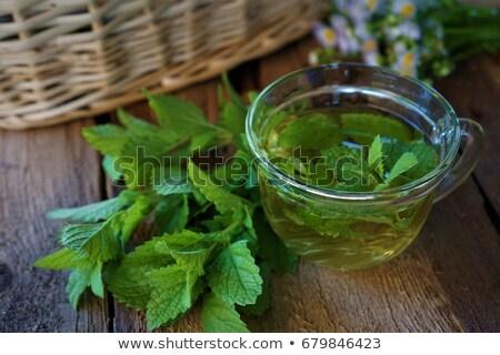 água de limão bálsamo jardim Foto stock © ivonnewierink