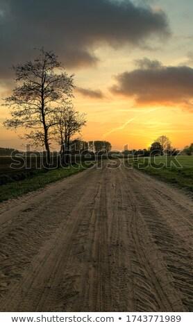 Chemin de terre arbre Bush soleil nature Photo stock © silkenphotography
