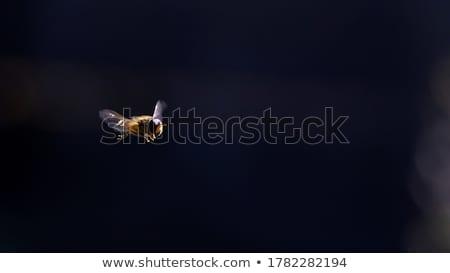 Klein bijen naar nectar bloem Stockfoto © Yongkiet