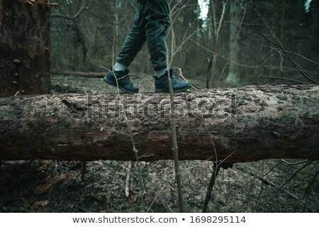 Montana forestales edad podrido árbol Foto stock © mahout