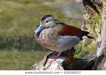 Oturma kaya doğa kuş mavi taş Stok fotoğraf © dirkr