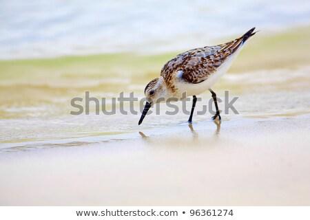 Néz étel part sziget természet madár Stock fotó © wildnerdpix