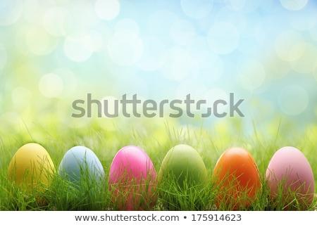 Peint œufs de Pâques herbe ciel fleur papillon Photo stock © alinbrotea