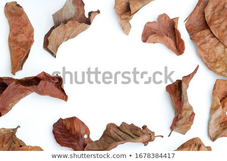 Withered leaf. Stock photo © Leonardi
