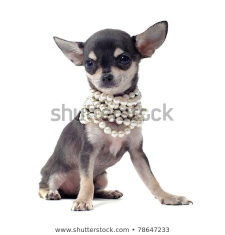 perro · blanco · negro · pequeño · cesta · ojos - foto stock © klinker