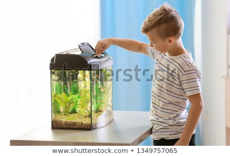boy feed fish water Stock photo © Paha_L