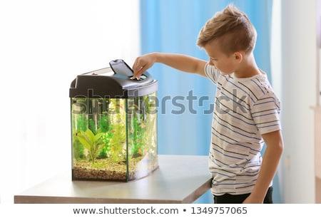 boy feed fish water stock photo © paha_l