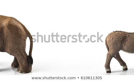 Republikein democraat amerikaanse verkiezing campagne strijd Stockfoto © Lightsource