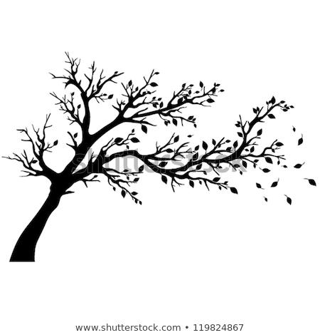 Silhouette albero rami bianco nero fotografia panorama Foto d'archivio © ultrapro