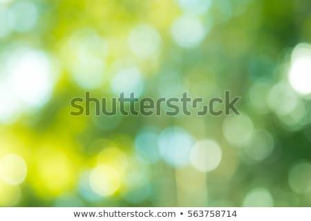 Abstract bokeh on green Stock photo © karandaev