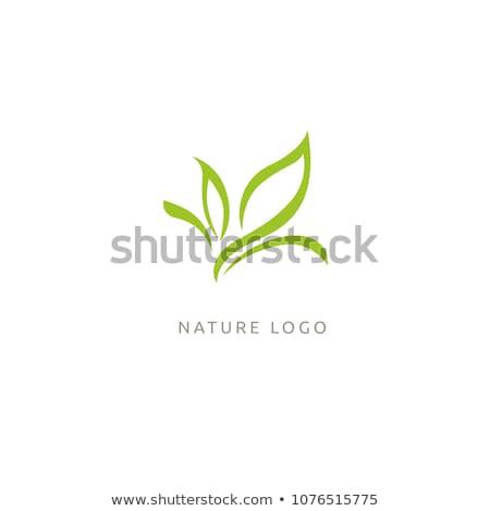 Organisch bio groen blad logo-ontwerp silhouet vers Stockfoto © adrian_n
