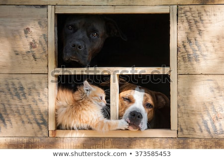 puppies outside the doghouse stock photo © bluering
