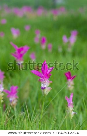 Tulpen groeiend ondergrondse illustratie achtergrond kunst Stockfoto © bluering