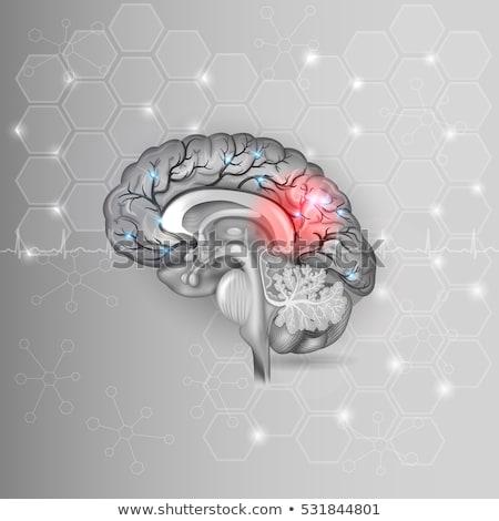 human brain with red light abstract light grey hexagon backgroun stock photo © tefi