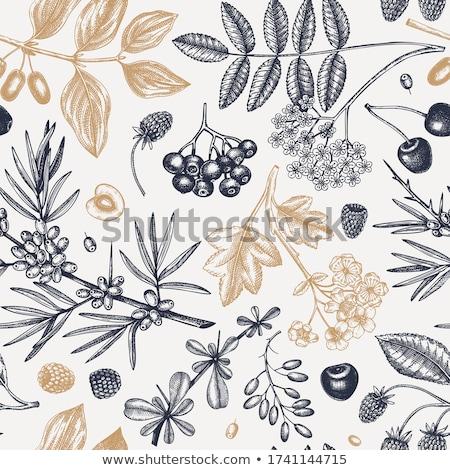 vintage bilberry label on seamless pattern stock photo © conceptcafe