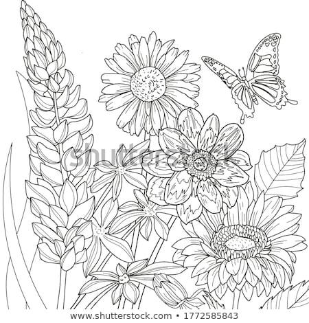 Fleur page dessinés à la main floral feuille noir Photo stock © imagepluss