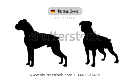 Strong dog. Logo for Sports Club. Bulldog with big muscles. Logo Stock photo © popaukropa
