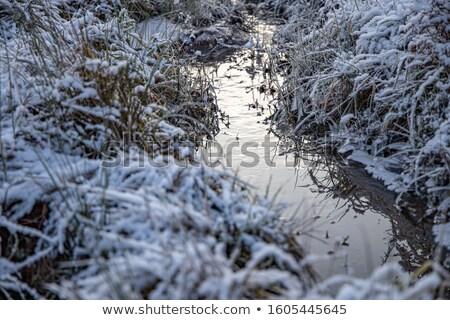fagyos · textúra · jég · borító · fagyott · kicsi - stock fotó © Mps197