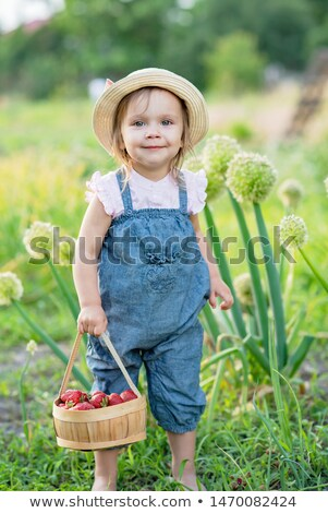 Young Girl planting strawberries Stock photo © IS2