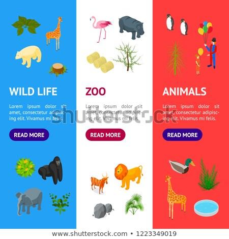 Kamu hayvanat bahçesi izometrik 3D posterler ayarlamak Stok fotoğraf © studioworkstock