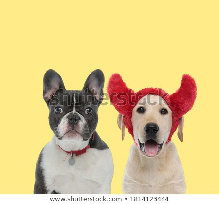 Photo stock: Couple · cute · chiens · diable