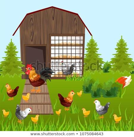 Chicken farm coop Vector. Spring season green background farming Stock photo © frimufilms
