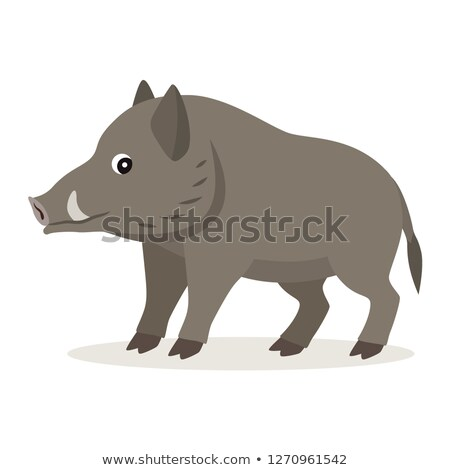 cute forest animal gray boar icon isolated on white background stock photo © marysan