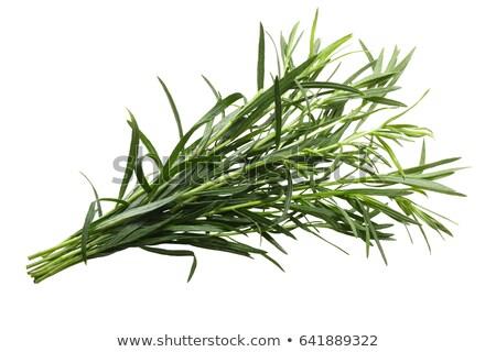свежие белый Spice трава французский Сток-фото © maxsol7