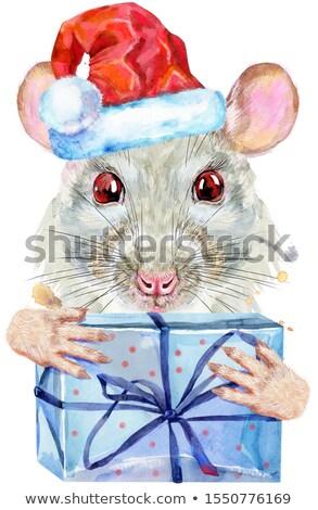 Acuarela retrato blanco rata sombrero Foto stock © Natalia_1947